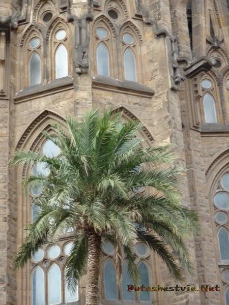 Пальма во дворе храма Саграда Фамилия в Барселоне