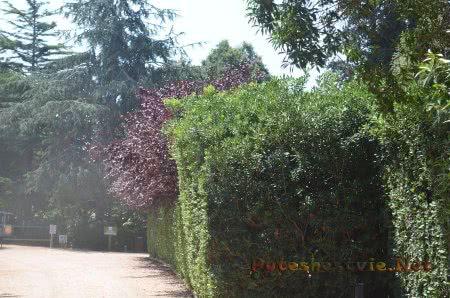 Зелень в саду в Ллорет-де-Мар