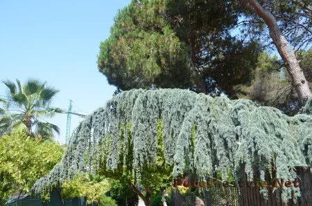 Интересная растительность в Ллорет-де-Мар