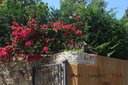 Зелень в частном секторе Ллорет-де-Мар