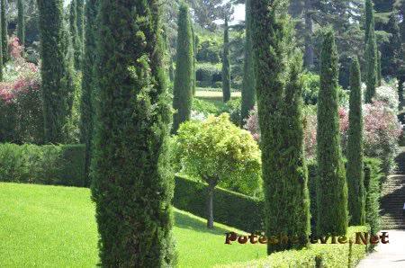 Ухоженные аллеи в Саду Святой Клотильды