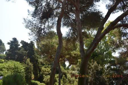 Растительность в Саду Святой Клотильды в Ллорет-де-Мар