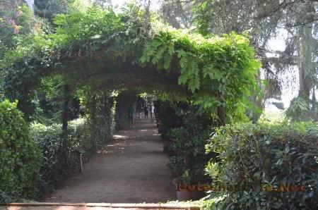 Туристы прогуливающиеся в тени Садов Святой Клотильды