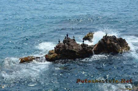Бакланы на скале неподалеку от берега Ллорет-де-Мар