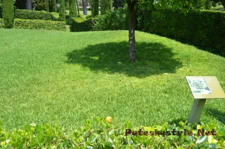 Спелый апельсин на зеленой траве сада