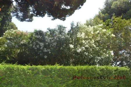 Цветущие и благоухающие Сады Святой Клотильды В Ллорет-де-Мар