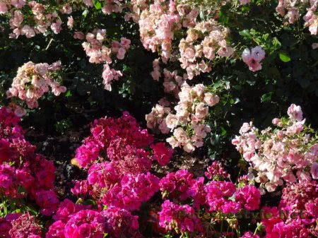 Цветы в одной из клумб в Мадриде
