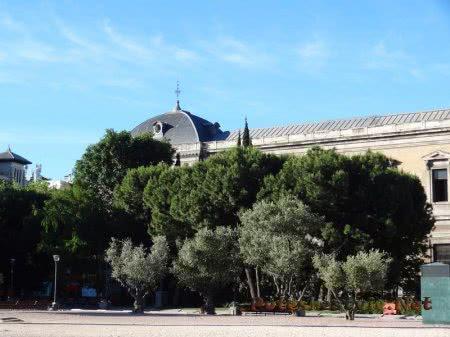 Деревья на улице Мадрида