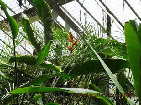 В Ботаническом саду Мадрида