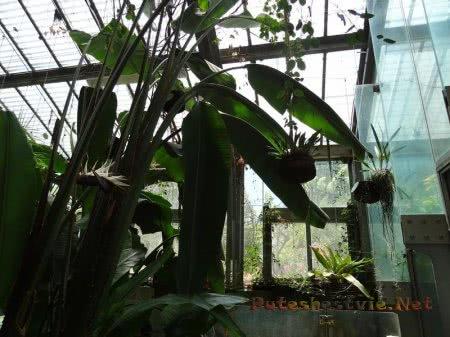 Растения Ботанического сада Мадрида