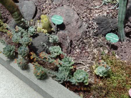 Суккуленты в Ботаническом саду Мадрида