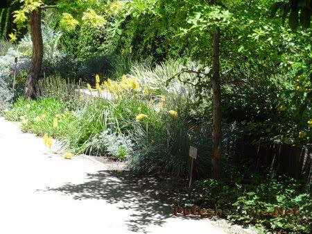 Многообразие флоры Ботанического сада Мадрида