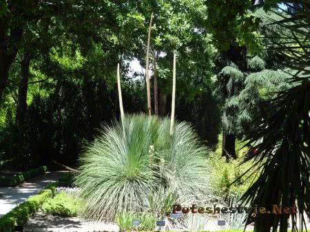 Тенистые дорожки среди зелени в Ботаническом саду