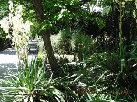 Разнообразие растений в Ботаническом саду