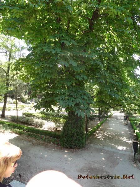 Приятная тень Ботанического сада