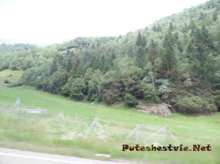 Сосны Швейцарии