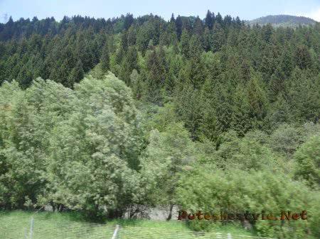 Непроходимые горные леса в Альпах