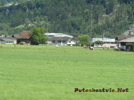 Альпийские луга и коровы Милка