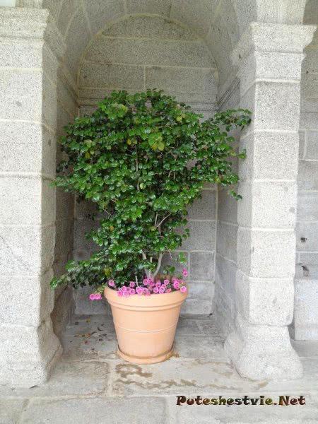 Зелень украшает ниши стен Эскориала