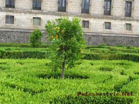 Плоды на апельсиновом дереве в Саду Эскориала