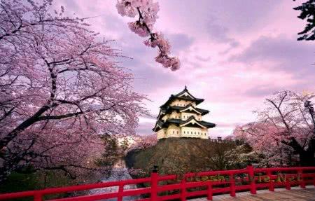 Праздник Ханами в Японии