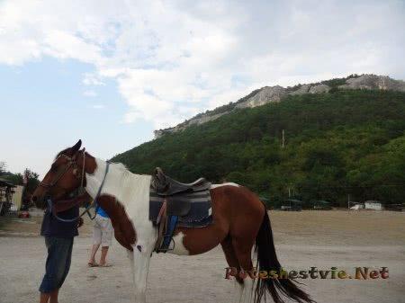 Лошади на Мангупском озере
