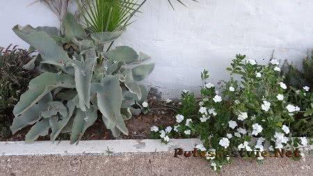 Цветы в саду отеля Эль Муради Бич