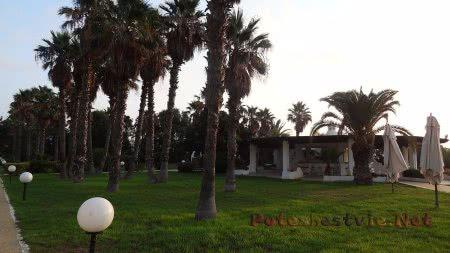 Множество пальм с саду отеля Эль Муради Бич Хаммамет