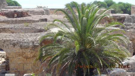 Руины римских терм Туниса обросли пальмами