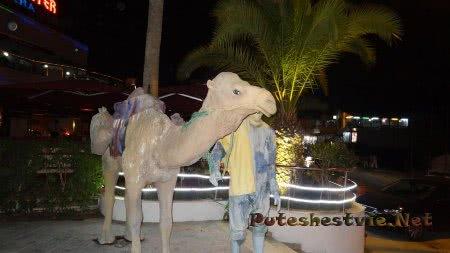 Верблюд - символ Туниса