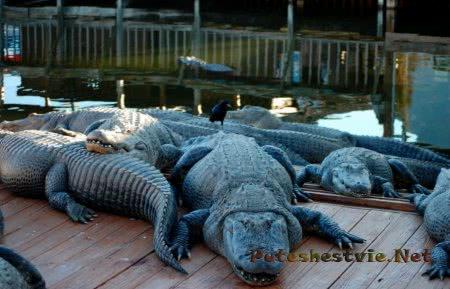 Тематический парк Gatorland