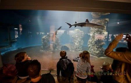Водный зоопарк Aqua-Zoo