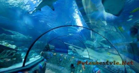 Интересные аквариумы Италии