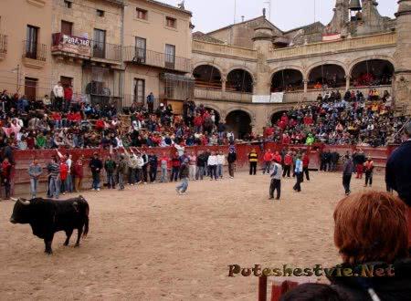 Карнавал быков