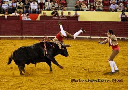 Торада – бои быков в Португалии