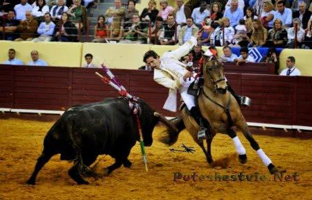 Торада – Португальские бои быков