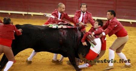 бои быков в Португалии