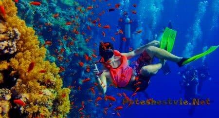 Дайвинг на острове Занзибар