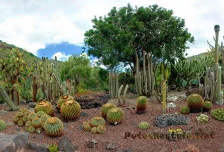 Ботанический сад города Сольера