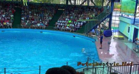 Дельфинарий Аква-Мир