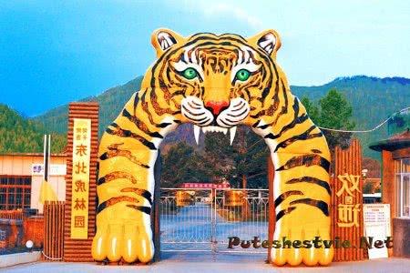 Парк северо-восточных тигров в Харбине
