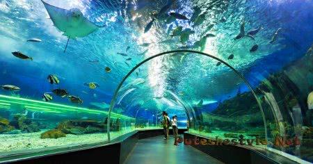 Морской парк «Манила Оушен Парк»