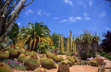 Сад Пинья-де-Роса (Jardín Pinya de Rosa)